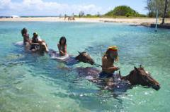Braco Stables Horseback Ride and Swim  Excursion from Falmouth